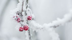 Sorbas cubiertas con escarcha y nieve metrajes