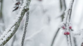 Sorbas cubiertas con la escarcha y la nieve, movimiento de la cacerola almacen de video