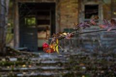 Sorbe dans la perspective du bâtiment abandonné dans Chornobyl photo libre de droits