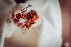 Sorbe dans les mains de la jeune mariée Photographie stock libre de droits