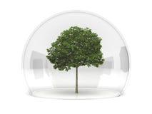 Sorbus tree Stock Photography