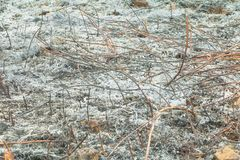 Sorga l'erba che bruciata della terra la foglia di estate è ceneri riscaldamento globale di inquinamento atmosferico Immagini Stock