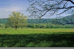 Sorgente, alberi, campi fotografie stock