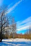 Sorgente in anticipo in foresta Fotografia Stock