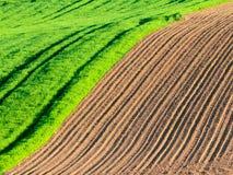 sorgente blu del cielo di verde di erba del campo Fotografie Stock Libere da Diritti