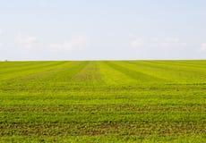 sorgente blu del cielo di verde di erba del campo Fotografia Stock