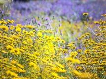 sorgente blu del cielo di verde di erba del campo Fotografia Stock Libera da Diritti