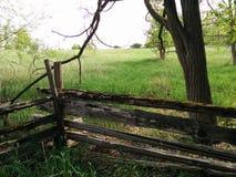 sorgente blu del cielo di verde di erba del campo Immagini Stock Libere da Diritti