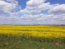 sorgente blu del cielo di verde di erba del campo Immagini Stock