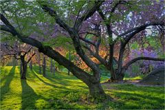 Sorgente in Central Park Immagini Stock Libere da Diritti