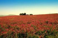 Sorgente che fiorisce paesaggio variopinto della prateria Immagini Stock Libere da Diritti