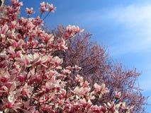 sorgente dei fiori Immagini Stock Libere da Diritti
