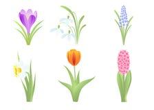 sorgente dei fiori Fotografia Stock Libera da Diritti