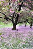 sorgente del Central Park fotografie stock libere da diritti