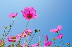 Sorgente del fiore Fotografia Stock Libera da Diritti