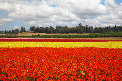 Sorgente del fiore nell'Israele Immagine Stock