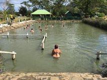 Sorgente di acqua calda dello stagno del fango di Sabeto con la folla Nadi vicino, Figi dell'ospite Immagine Stock