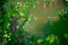 Sorgente di acqua calda di Huaqing fotografia stock