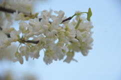 Sorgente di fioritura Fotografia Stock Libera da Diritti