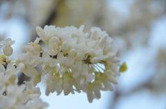 Sorgente di fioritura Immagini Stock