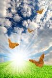 sorgente di paesaggio della farfalla Fotografia Stock