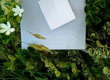 Sorgente Foglie e confine dei fiori fotografia stock