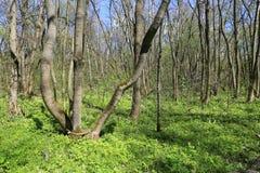 Sorgente in foresta Fotografie Stock
