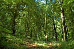 Sorgente in foresta Fotografie Stock Libere da Diritti