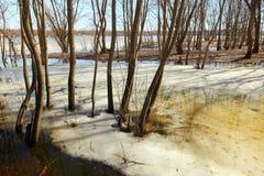 Sorgente L'ultimo ghiaccio sul fiume Alta marea Immagine Stock Libera da Diritti