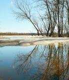 Sorgente L'ultimo ghiaccio sul fiume Alta marea Fotografia Stock Libera da Diritti