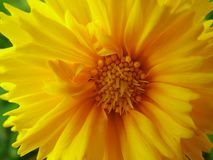 Primavera luminosa immagini stock libere da diritti