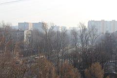 Sorgente a Mosca Immagini Stock Libere da Diritti