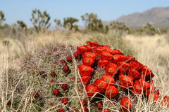 Sorgente nel deserto di Mojave fotografia stock