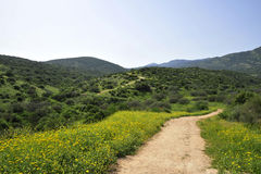 Sorgente nel Galilee superiore. Fotografia Stock