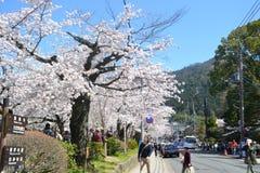 Sorgente nel Giappone Immagini Stock Libere da Diritti