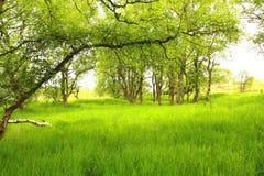 Sorgente nella foresta Immagini Stock Libere da Diritti