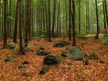 Sorgente nella foresta immagini stock