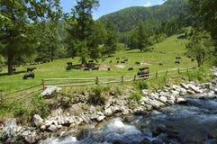 Sorgente nelle alpi svizzere Fotografia Stock Libera da Diritti