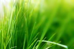 Sorgente o fondo di estate con erba verde Fotografia Stock Libera da Diritti