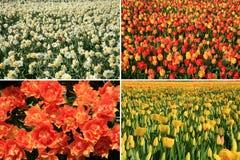 sorgente olandese dei fiori del paese del collage Immagine Stock Libera da Diritti
