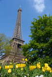 Sorgente a Parigi, Torre Eiffel Fotografie Stock
