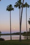 Sorgere della luna e palme al tramonto fotografia stock