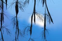 Sorgere della luna tramite le palme da datteri Immagine Stock