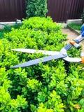 Sorgfalt des Gartens, Beschneidung von Niederlassungen, Hand mit Gartenwerkzeug stockfotos
