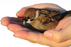 Sorgfalt für die Vögel Stockfotografie