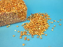 Sorghum. Seeds and box on blue background Stock Photo