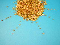 Sorghum. Seeds on blue background Stock Images