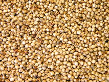 Sorghum. White sorghum seeds suitable as background Royalty Free Stock Photos