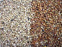 Sorghum. Red and white sorghum suitable as background Royalty Free Stock Photo