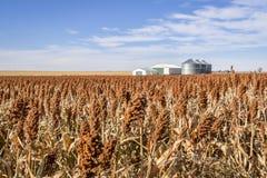 Sorghum field in Kansas. Red sorghum field and farm buildings in western Kansas royalty free stock photo